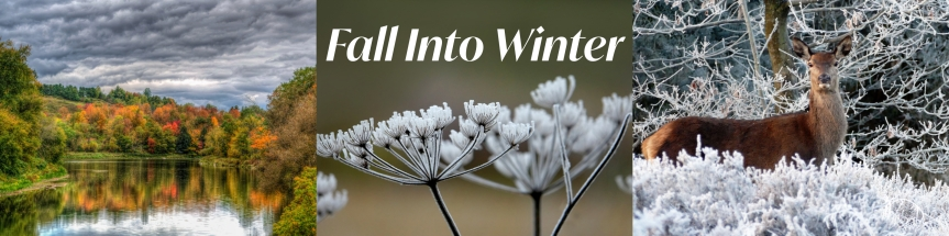 fall-into-winter